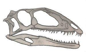 Zupaysaurus - Skull diagram