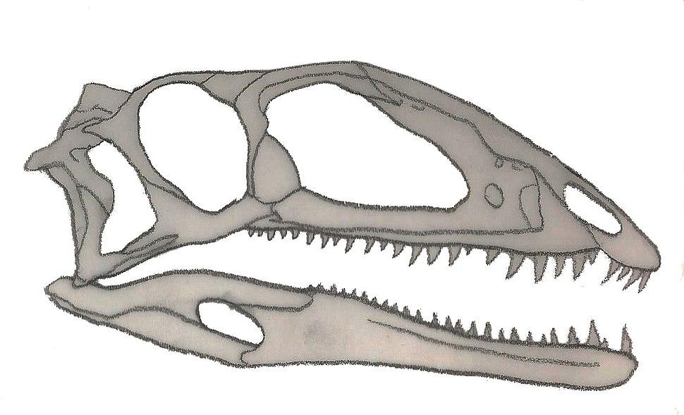 Zupaysaurus skull