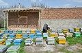((( زنبور داری در مراغه ))) - panoramio (3).jpg