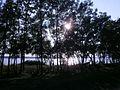 Õhtune päike Kakumäe rannas.JPG