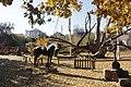 Історико-культурний комплекс 700-річний Запорозький дуб Власне дуб 06.JPG