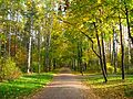 Аллея парка Сосновка.jpg