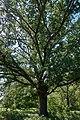 Андріївський ліс 13.jpg