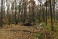 Бесідка - Forest shelter - panoramio.jpg
