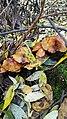 "Грибочки в парке ""Долина реки Яуза"".jpg"