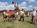 Мадьярские лошади (16913717646).jpg