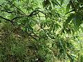 Парк шума Гази Баба во мај (121).JPG