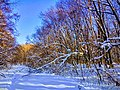 Региональный ландшафтный парк «Диканский» зимой 4.jpg