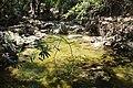 Речка. Epta pigos (7 источников). Archangelos. Rhodos. Greece. Июнь 2014 - panoramio.jpg