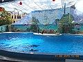 Сочинский дельфинарий парка «Ривьера». 25.jpg