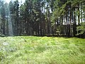 Урочищные места - panoramio (16).jpg