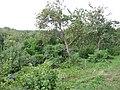 Фруктовый сад с огородами и водоемом между пристанью и каменным арочным мостом 03.JPG