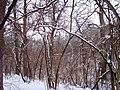 Чернечий Ліс 27.jpg