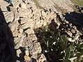 العش دائرة الحمادية ولاية برج بوعريريج.jpg