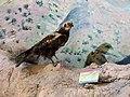 حیوانات تاکسی درمی شده - موزه تاریخ طبیعی شهر قم 18.jpg