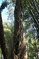 น้ำตกศรีดิษฐ์ Sri Dit waterfall - panoramio - Thaweesak Churasri (1).jpg