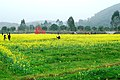 广州最美乡村—红山村 - panoramio (23).jpg