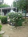 桃園觀音白沙岬燈塔 44 (15163096511).jpg