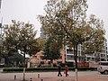 瑞安瑞光大道街景 - panoramio.jpg