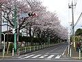 由野台中学校前 - panoramio.jpg