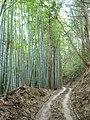竹林 Bamboo grove 2011.7.29 - panoramio.jpg