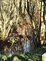 -2021-03-15 Drainage ditch, Crostwight Heath.JPG