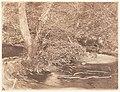 -Tree and Brush in Creek Scene- MET DP143492.jpg
