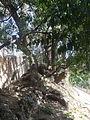 00 Badalona - Parc de Can Solei i Ca l'Arnús 06.JPG