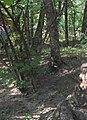 100 2209 Нікітський ботанічний сад.jpg