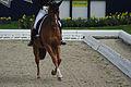 13-04-21-Horses-and-Dreams-Fabienne-Lütkemeier (25 von 30).jpg