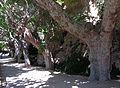 143 Sant Miquel del Fai, camí de l'Ermita.JPG