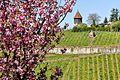 150409 Denkmalschutz im Landschaftsschutz.jpg