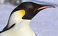 2007 Snow-Hill-Island Luyten-De-Hauwere-Emperor-Penguin-11.jpg