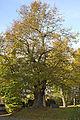 2011-10 ND Lotterlinde Augustusburg(Sachsen).jpg