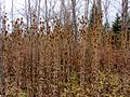 20111120 21 near Racine, Wisconsin (6395820467).jpg