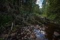 20120721-Река Восломка возле деревни Вослома.jpg