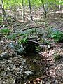 2013-05-06 18 41 34 Closer view of a spring along the Orange Trail in Point Mountain Reservation.jpg