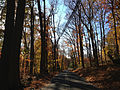 2014-11-02 14 39 21 View west along a wooded portion of Woosamonsa Road during autumn in Hopewell Township, New Jersey.jpg