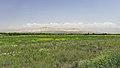 2014 Prowincja Ararat, Krajobraz widziany z drogi prowadzącej do klasztoru Chor Wirap (02).jpg