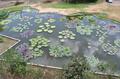 4.Caracas botanical garden jardin botanico ucv venezuela.png