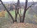 565 01 Choceň, Czech Republic - panoramio (58).jpg