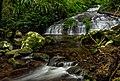 6639 Cascades Toolona Creek.jpg