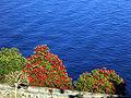 6694 - Isola Bella (Stresa) - Giardino barocco - Foto Giovanni Dall'Orto - 7-Apr-2003.jpg