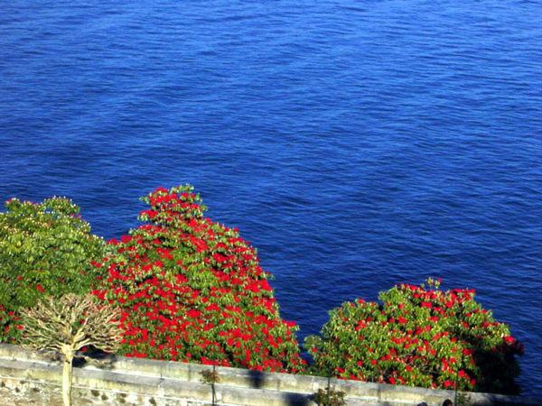 Giardino delle orchidee spontanee del mediterraneo - Giardino mediterraneo ...