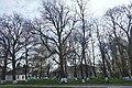 68-247-5014 вікові дерева біля лікарні.jpg
