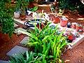 A@a part of Andr. garden - panoramio (17).jpg
