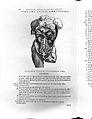 A. Vesalius, De humani corporis fabrica... Wellcome L0027059.jpg