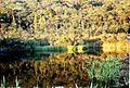 A077 Australia Fraser Island Salted Ponds Kingfisher bay (5052281318).jpg