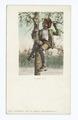 A Treed Coon (NYPL b12647398-62055).tiff