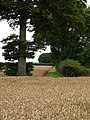 A Wolds' Field Edge - geograph.org.uk - 926596.jpg